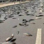 ファフロツキーズとは?空から魚などが降る現象の原因や事例を解説